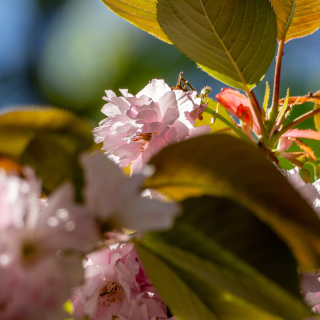 """""""Blossom."""" stock image"""