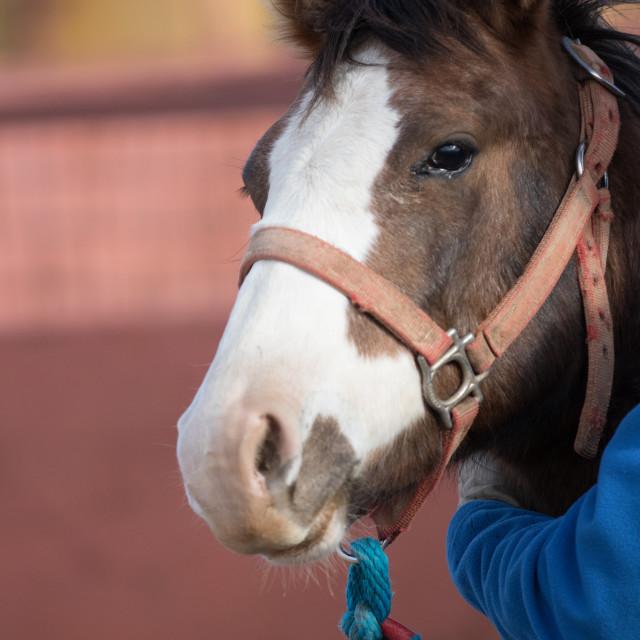 """Cute Pony"" stock image"