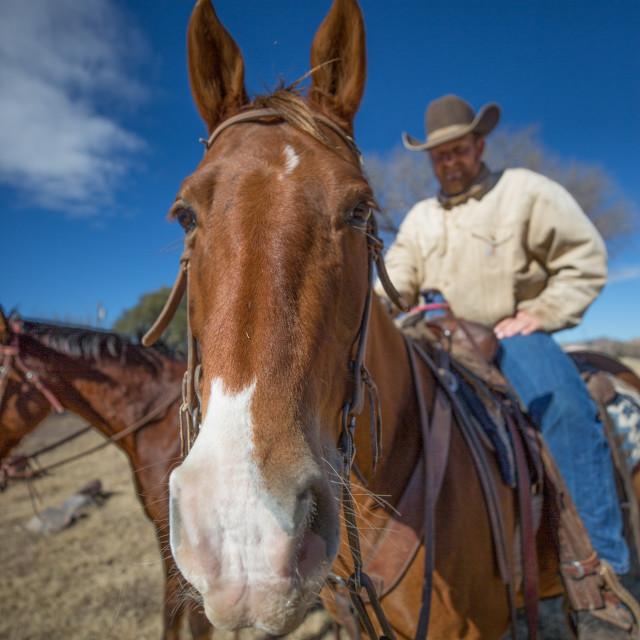 """Alert Horse"" stock image"