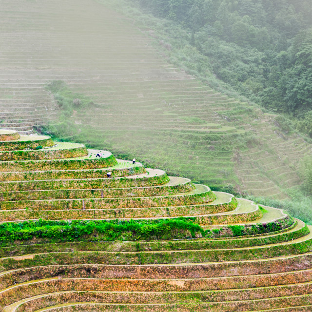 """Stunning scenery of Chinese rice terrace near Guilin"" stock image"