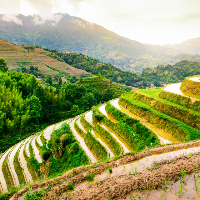"""Stunning sunset at the rice terrace near Guilin in China"" stock image"