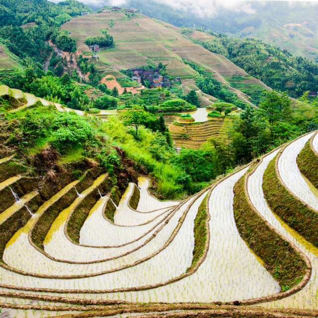 """Stunnig scenery of Chinese rice terrace near Guilin"" stock image"