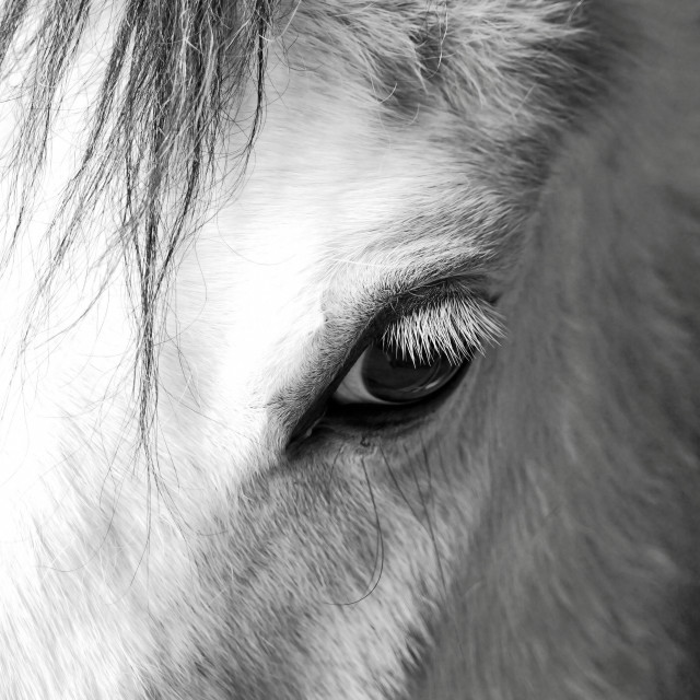 """The eye of a horse"" stock image"