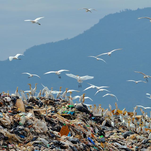 """""""Gathering egrets"""" stock image"""