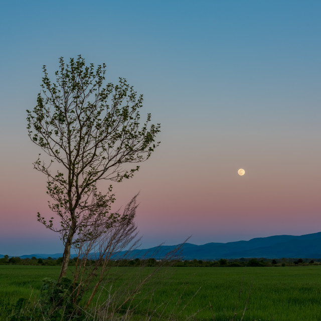 """""""Landscape at dusk with Moon and poplar"""" stock image"""