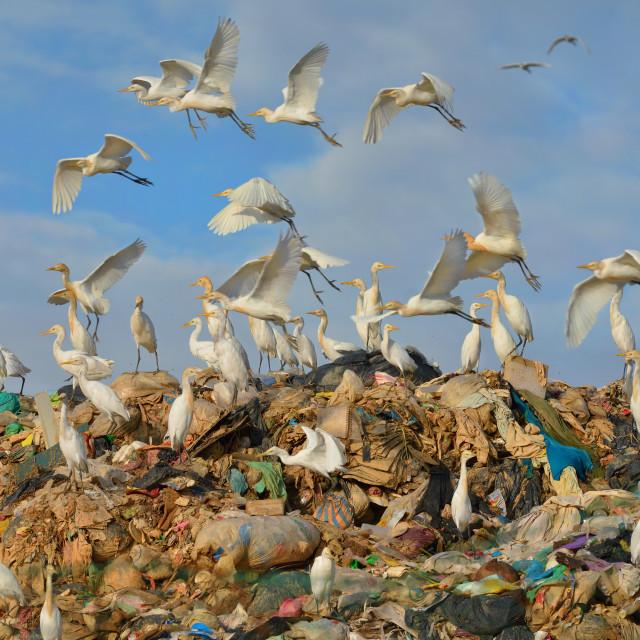 """Flock of egrets 2"" stock image"