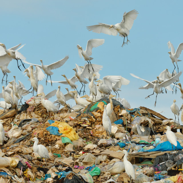 """Flock of egrets 1"" stock image"