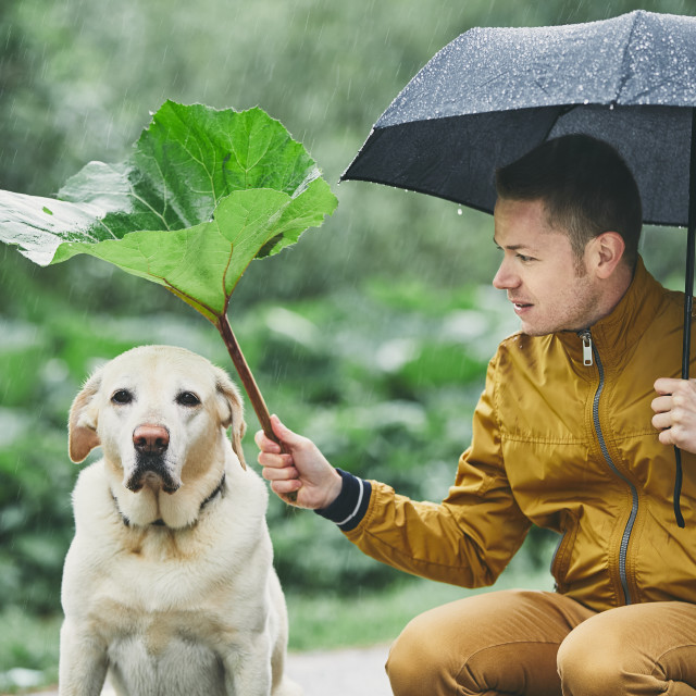 """""""Rainy day with dog in nature"""" stock image"""