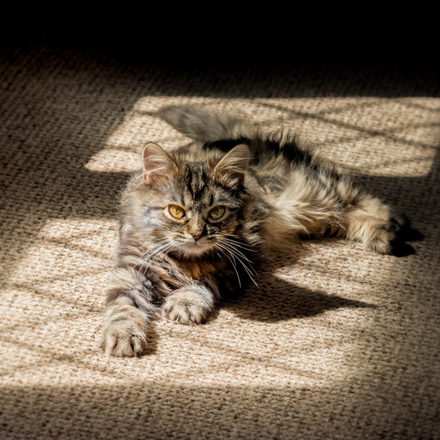 """kitten in the shadows"" stock image"