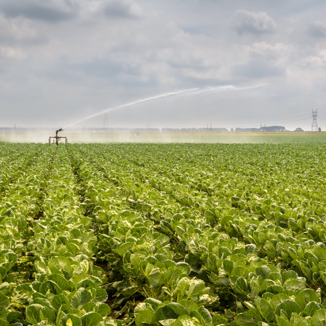 """Watering Crops"" stock image"