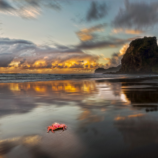 """Dusk at Piha Beach New Zealand"" stock image"
