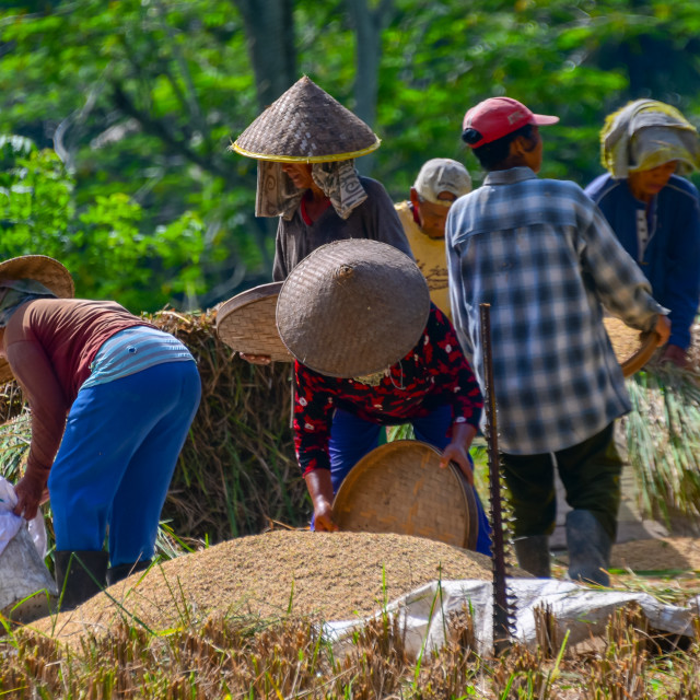 """Indonesian Farmers"" stock image"