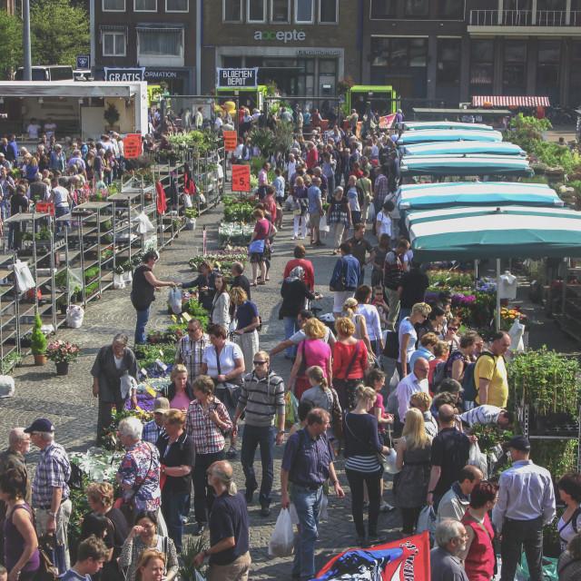 """On a Dutch flower market"" stock image"