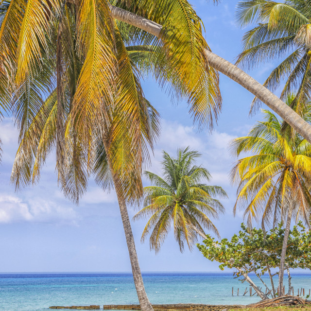 """""""Tropical beach with palm trees"""" stock image"""