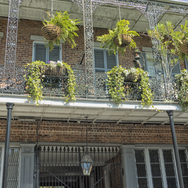 """""""Plants on balconies in New Orleans, USA"""" stock image"""