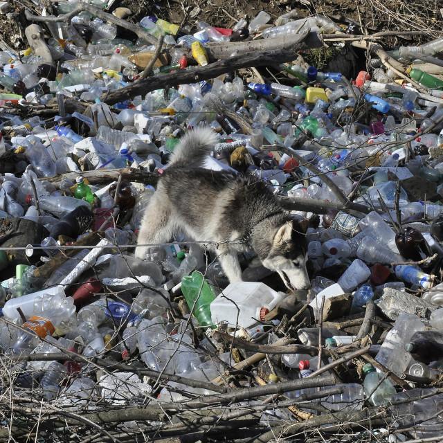"""""""Dog in plastic trash"""" stock image"""