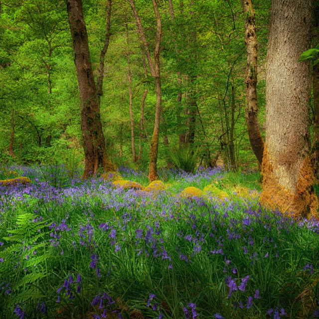 """Mystical woodland"" stock image"