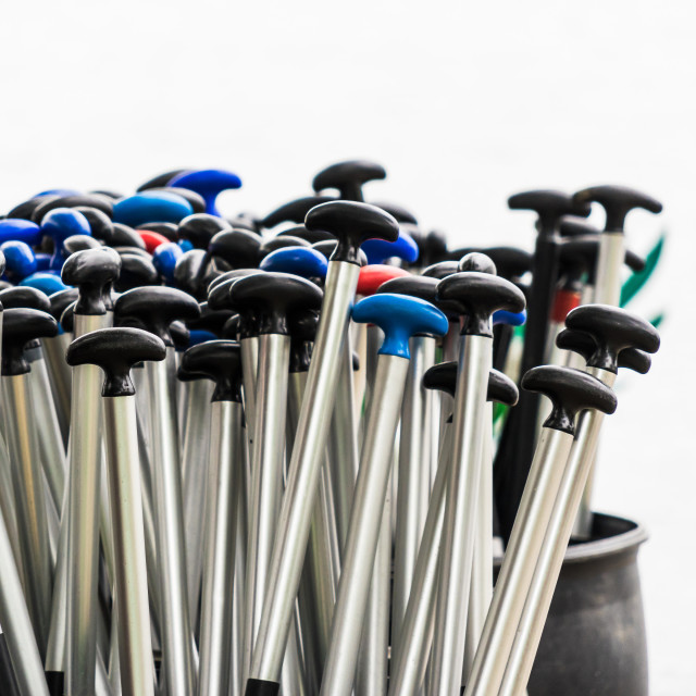 """Paddles provided for dragon boats at the dragon boat race"" stock image"