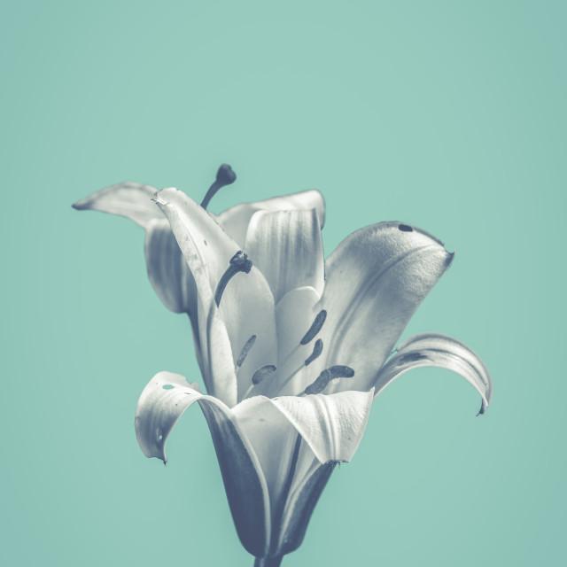 """""""Flower On Blue Design"""" stock image"""
