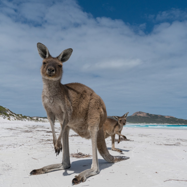 """Cape Le Grand National Park, Western Australia"" stock image"