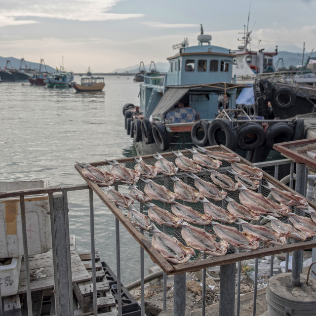 """Fish laid out to dry on drying net frames"" stock image"