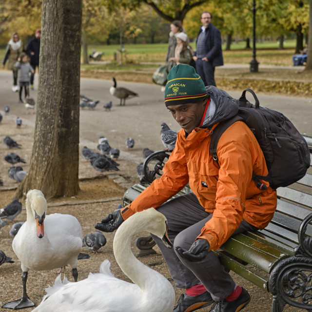 """Engaging swans in the park"" stock image"