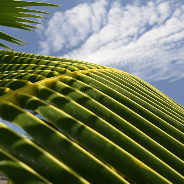 """Palm fronds and sky"" stock image"