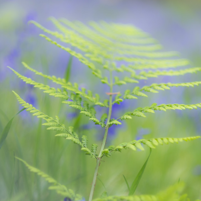 """Ferns & Bells"" stock image"