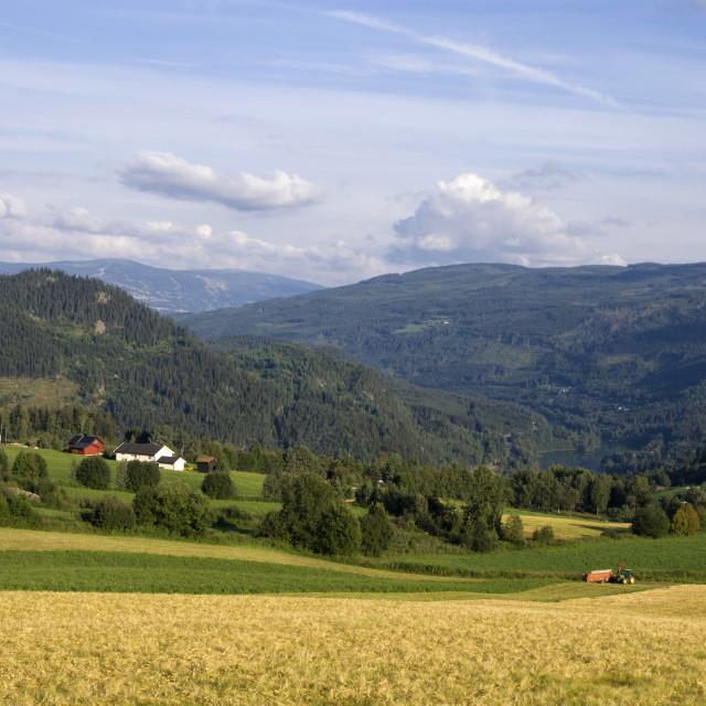 """""""Farmland in Gudbrandsdalen"""" stock image"""