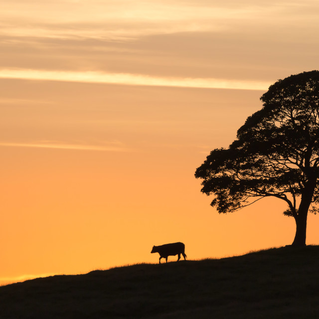 """Peak District Sunset"" stock image"
