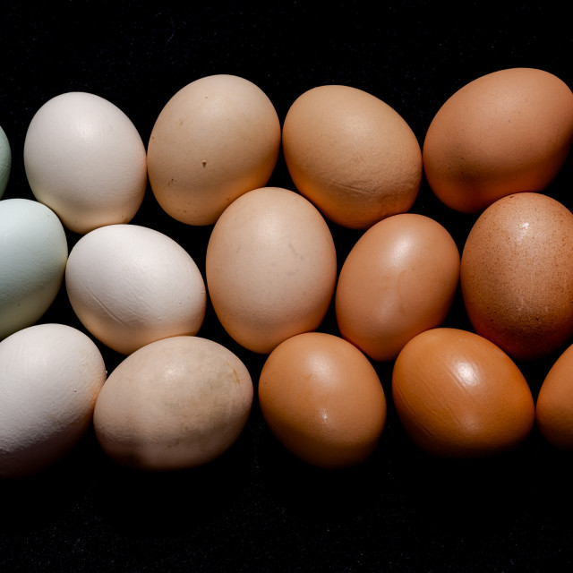 """""""Colourful eggs in brown to green gradient natural tones"""" stock image"""