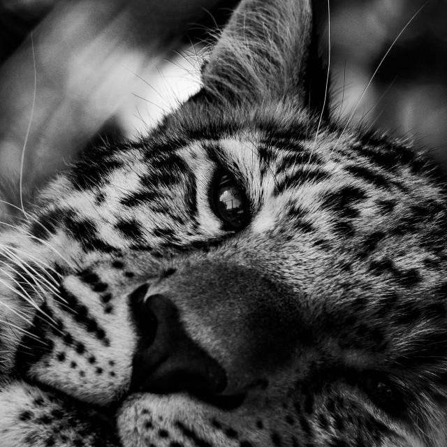 """""""Sleepy."""" stock image"""