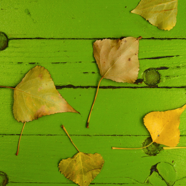 """Leaves On Wooden Background"" stock image"