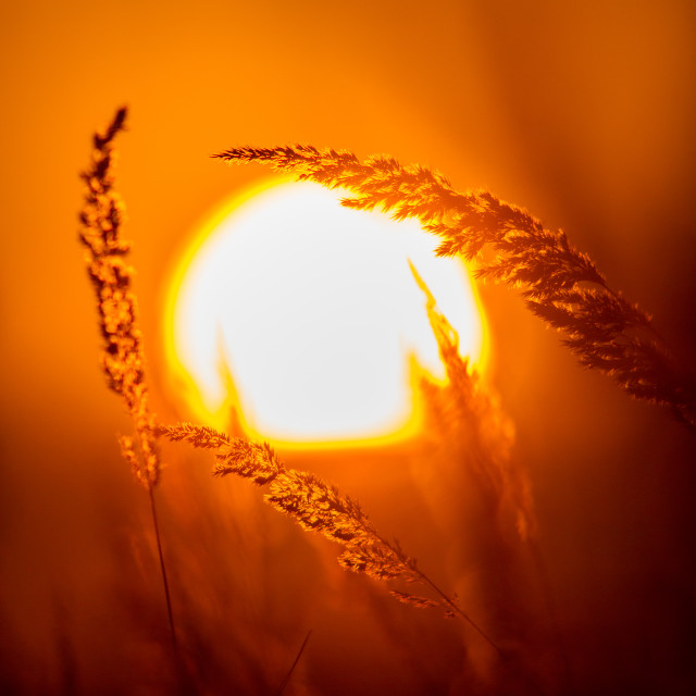 """""""Close up on the grassland in sunset light"""" stock image"""