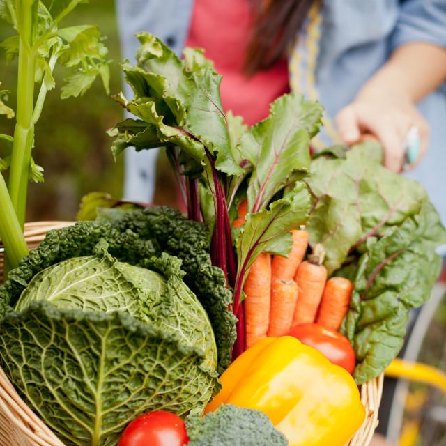 """""""bike basket full of vegetables"""" stock image"""