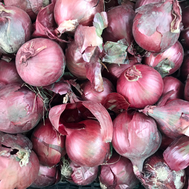 """Red onion background"" stock image"