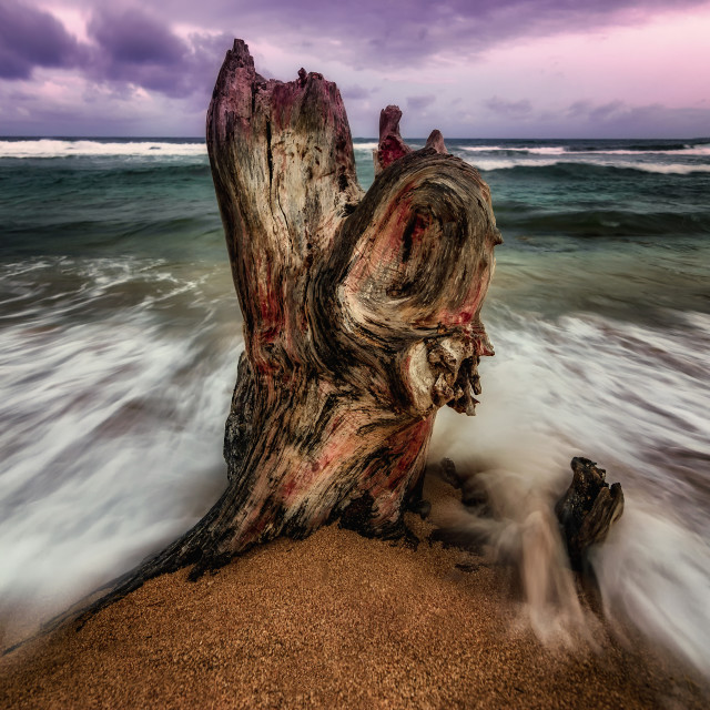 """Battered Tree Stump in the Surf"" stock image"