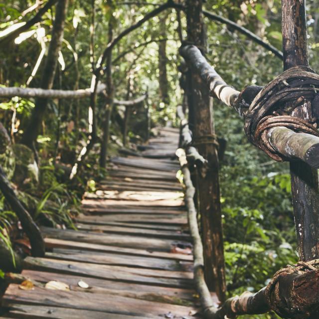 """Walkway through jungle"" stock image"