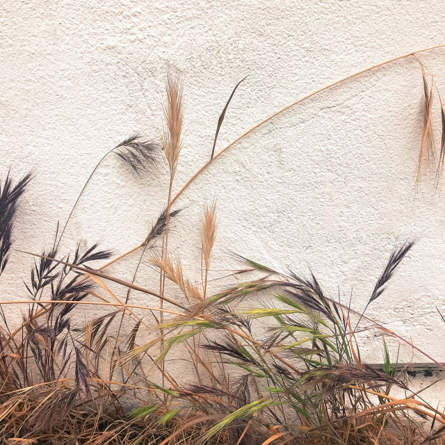 """""""Wild Plants Growing on an Exterior Wall"""" stock image"""