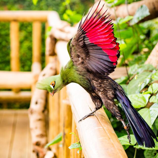 """""""Bird takes flight"""" stock image"""