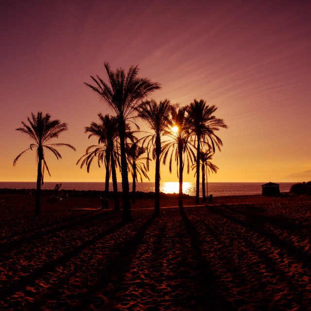 """""""Silhouetted palms at sunset"""" stock image"""