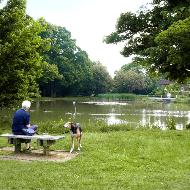 """Shenfield Common and Pond, Brentwood, Essex,UK"" stock image"