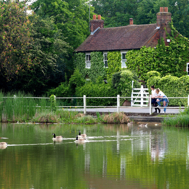 """""""Shenfield Common Pond, Brentwood, Essex,UK"""" stock image"""