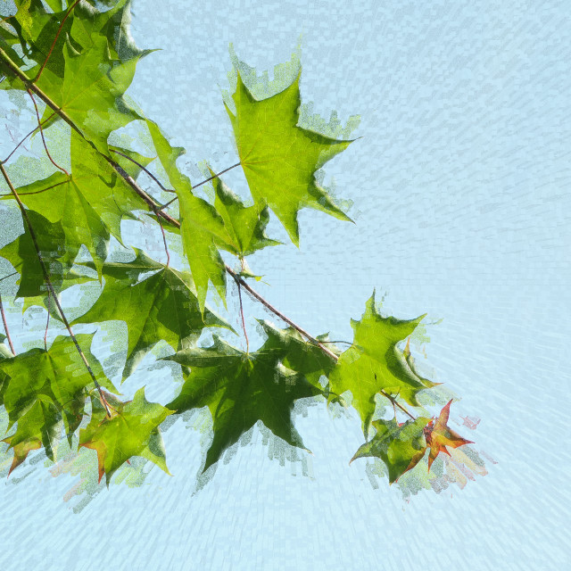 """""""Leaves on a tree"""" stock image"""