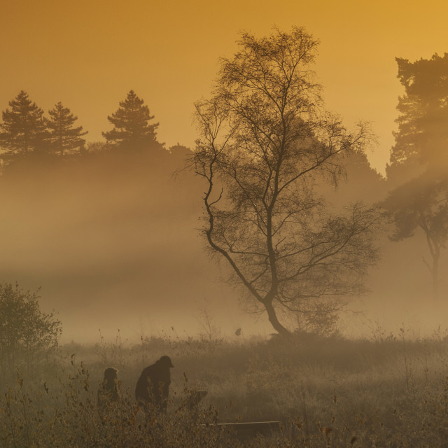 """Morning Mist Wisley Common"" stock image"