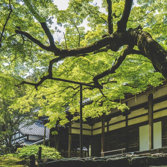 """""""Saihō-ji"""" stock image"""