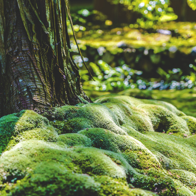"""Moss Sanctuary"" stock image"