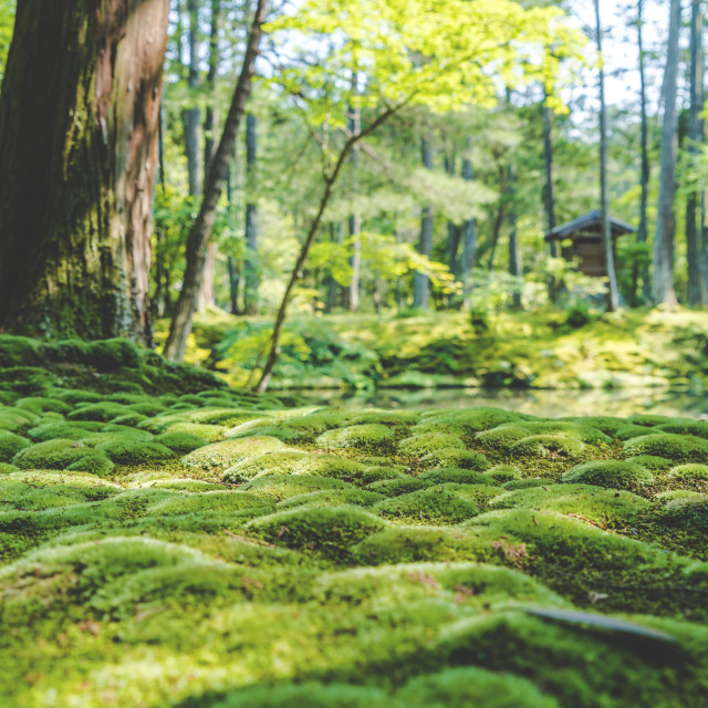 """""""Tranquil Moss"""" stock image"""