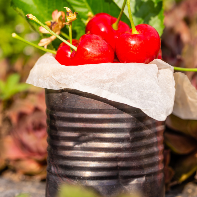 """Fresh red cherries in vintage tin on stone"" stock image"