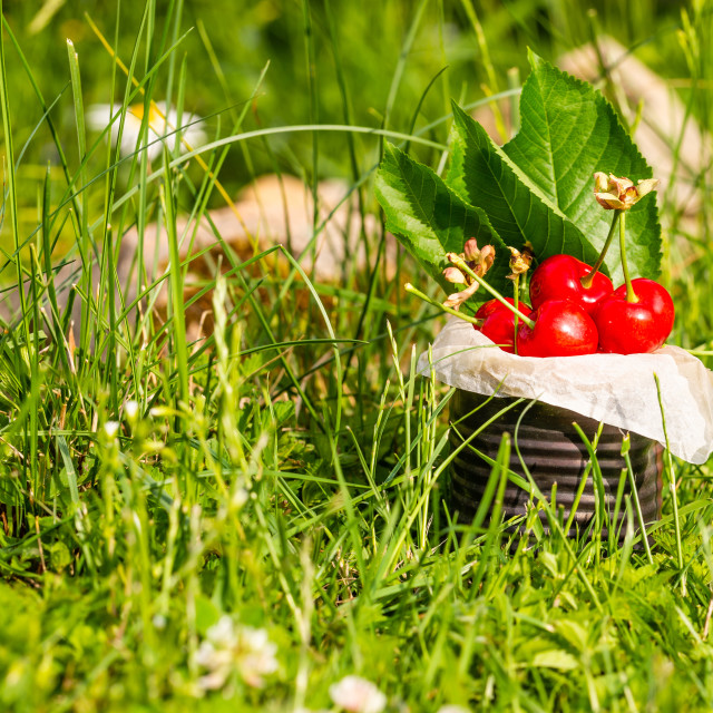 """Red cherries in vintage tin in high grass"" stock image"